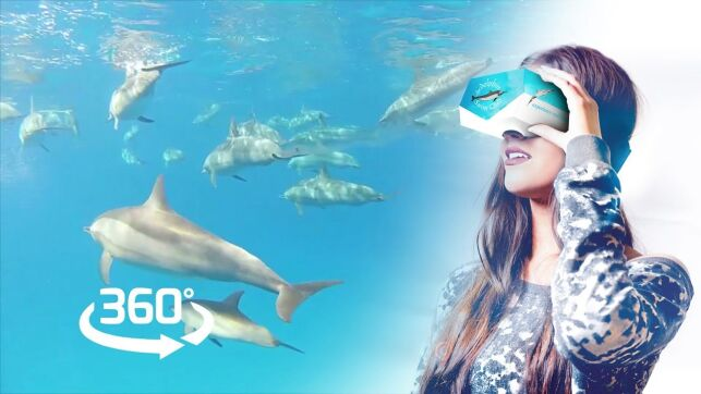 Nagez avec les dauphins en réalité virtuelle !