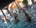 Parc aquatique du Perche - Piscine à Fontaine Simon