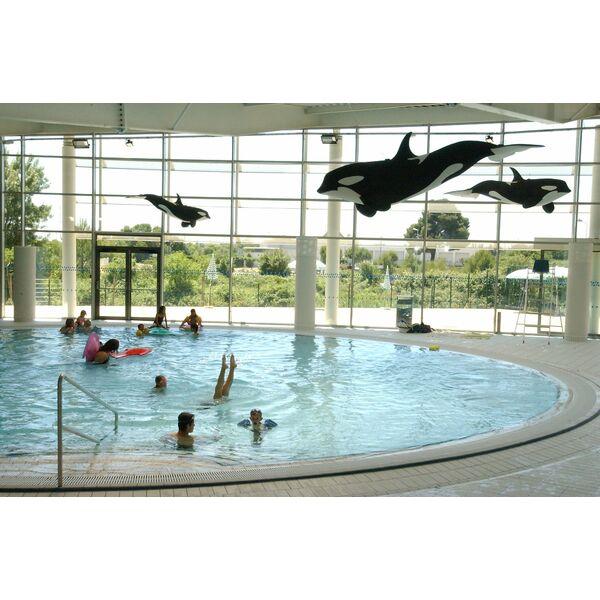 piscine amphitrite saint jean de vedas horaires