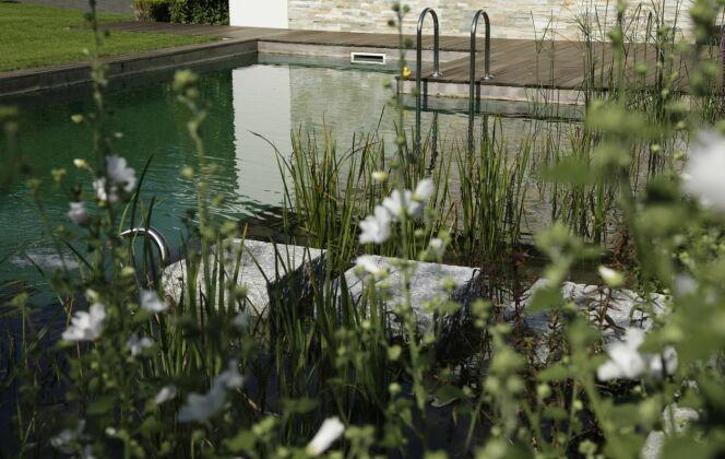 Piscine naturelle et plantes © Living-Pool de BIOTOP - www.baignade-ecologique.com
