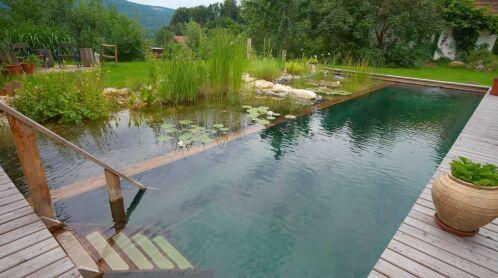 Piscine naturelle : un bassin bio dans votre jardin