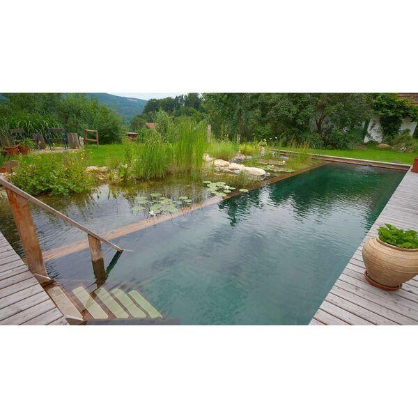Piscine naturelle ou biologique pour une baignade cologique - Ou planter un palmier dans son jardin ...