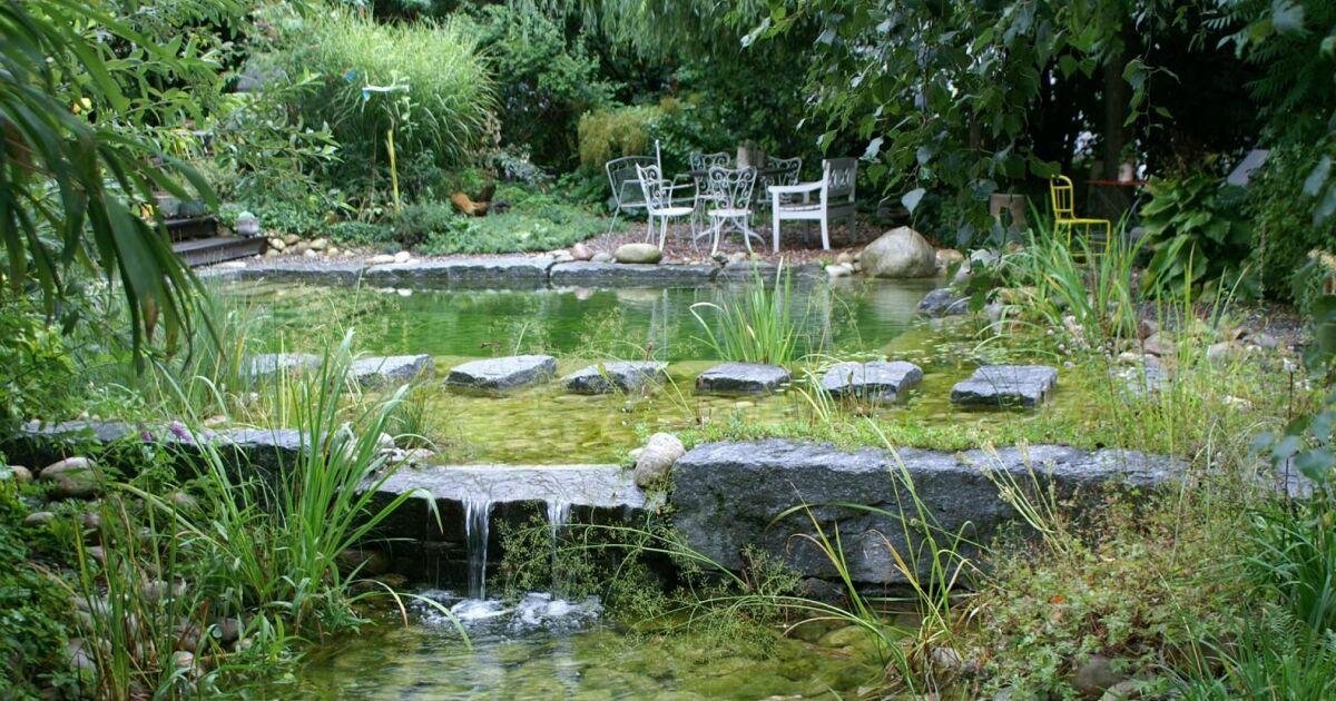 Piscine paysag re avec petite cascade bionova for Piscine jardin aquatique