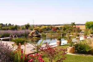 Piscine paysagère BioNova entourée de fleurs et de plantes