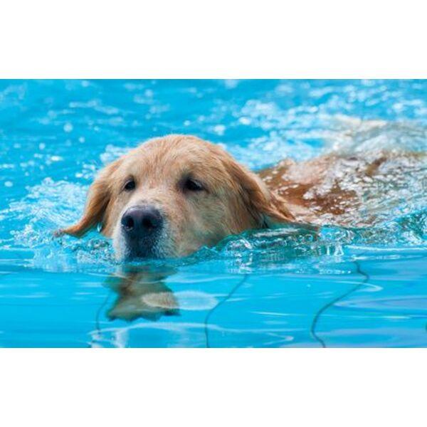 Une piscine pour chien rafra chir son compagnon en cas for Piscine pour grand chien