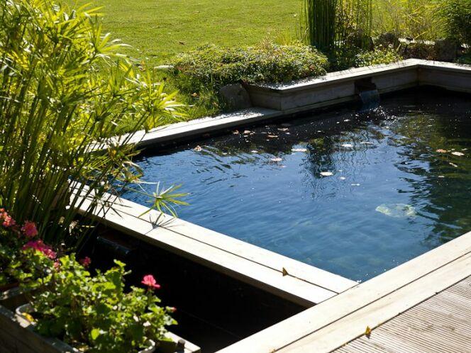 Bassins de baignade biologiques et cologiques for Autoconstruction piscine naturelle