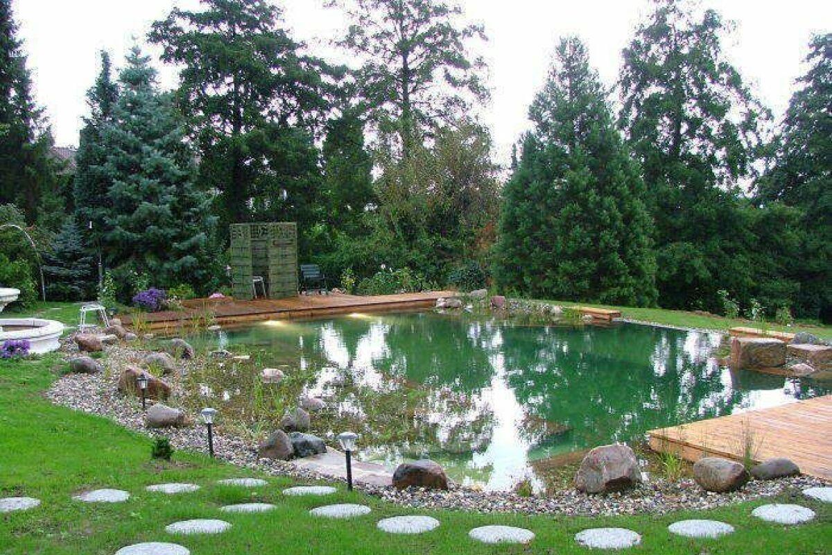 Transformer Son Bassin En Piscine quelles plantes pour le lagunage de la piscine naturelle et