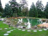 Quelles plantes pour le lagunage de la piscine naturelle ?