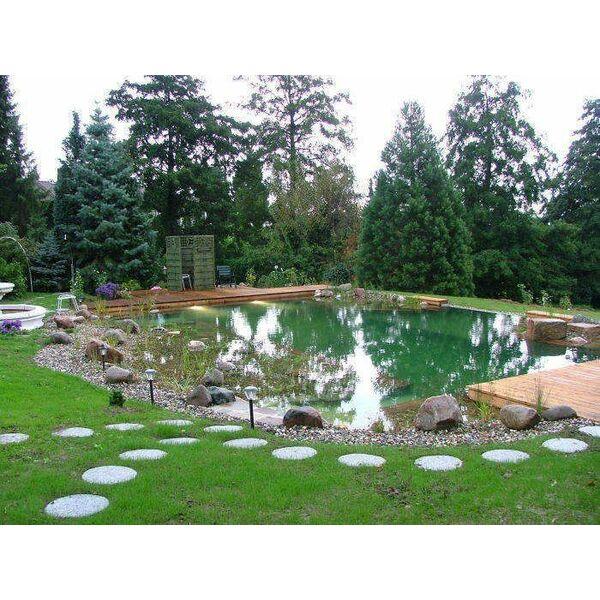 Quelles plantes pour le lagunage de la piscine naturelle ? © BioNova