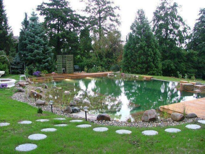 Quelles plantes pour le lagunage de la piscine naturelle for Bassin naturel piscine