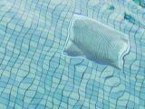 Quel prix pour remplir sa piscine ?
