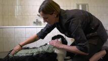 Insolite : des soins de thalasso … pour chiens