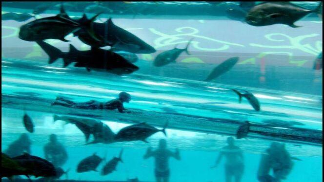 Un toboggan pour une glissade au milieu des requins : sensations fortes garanties !