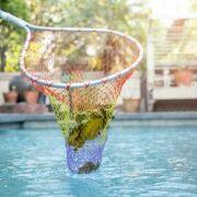 Une épuisette pour l'entretien de la piscine