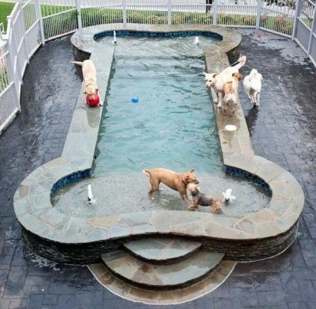Une piscine en forme d'os