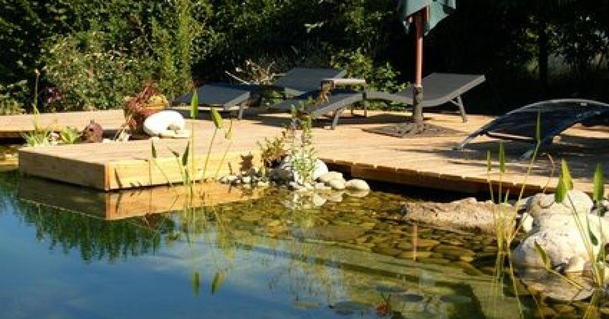 Des algues filamenteuses dans ma piscine for Algue dans piscine