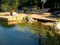 Des algues filamenteuses dans ma piscine