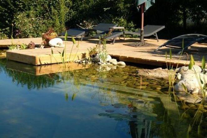 """Une piscine naturelle peut être le terrain de la prolifération des algues filamenteuses.<span class=""""normal italic petit"""">© valoudu63 - Fotolia.com</span>"""