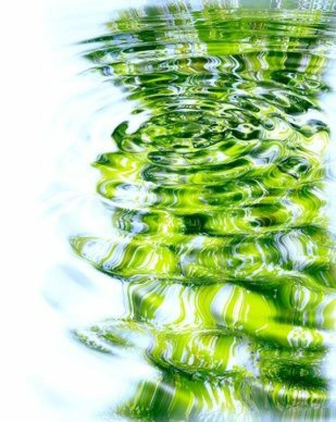 """Une piscine qui aime la nature : une piscine biologique<span class=""""normal italic petit"""">© Fons Laure - Fotolia.com</span>"""