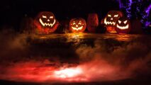 Plongez dans la piscine des ténèbres pour Halloween...