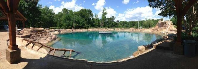 Vue panoramique de la piscine de Micky Thornton