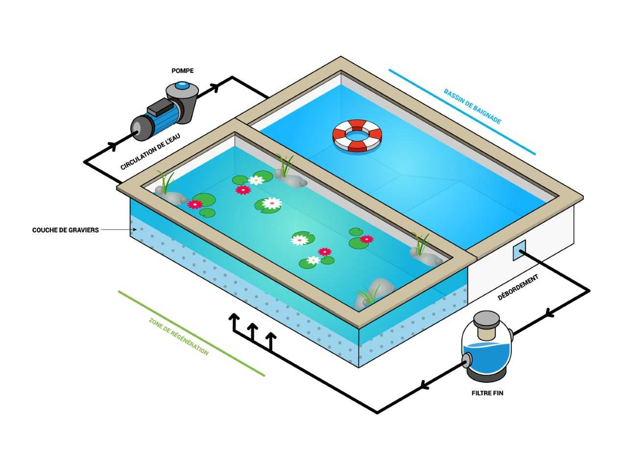 Schéma piscine naturelle : plan, fonctionnement et principe de filtration naturelle